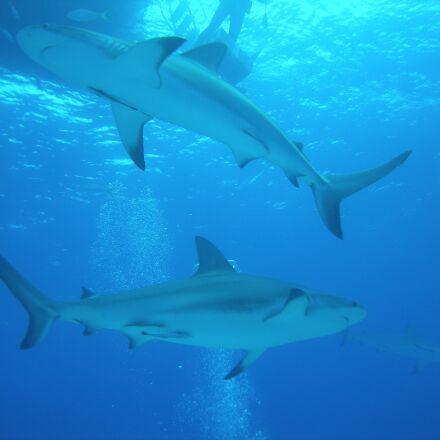 diving, dive, nassau, Nikon COOLPIX S510