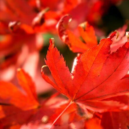 nature, season, autumn, Sony ILCE-6000
