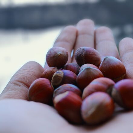 fruit, peace, organic, Canon EOS 1200D