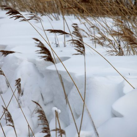 frost, winter, cold, Canon EOS 1100D