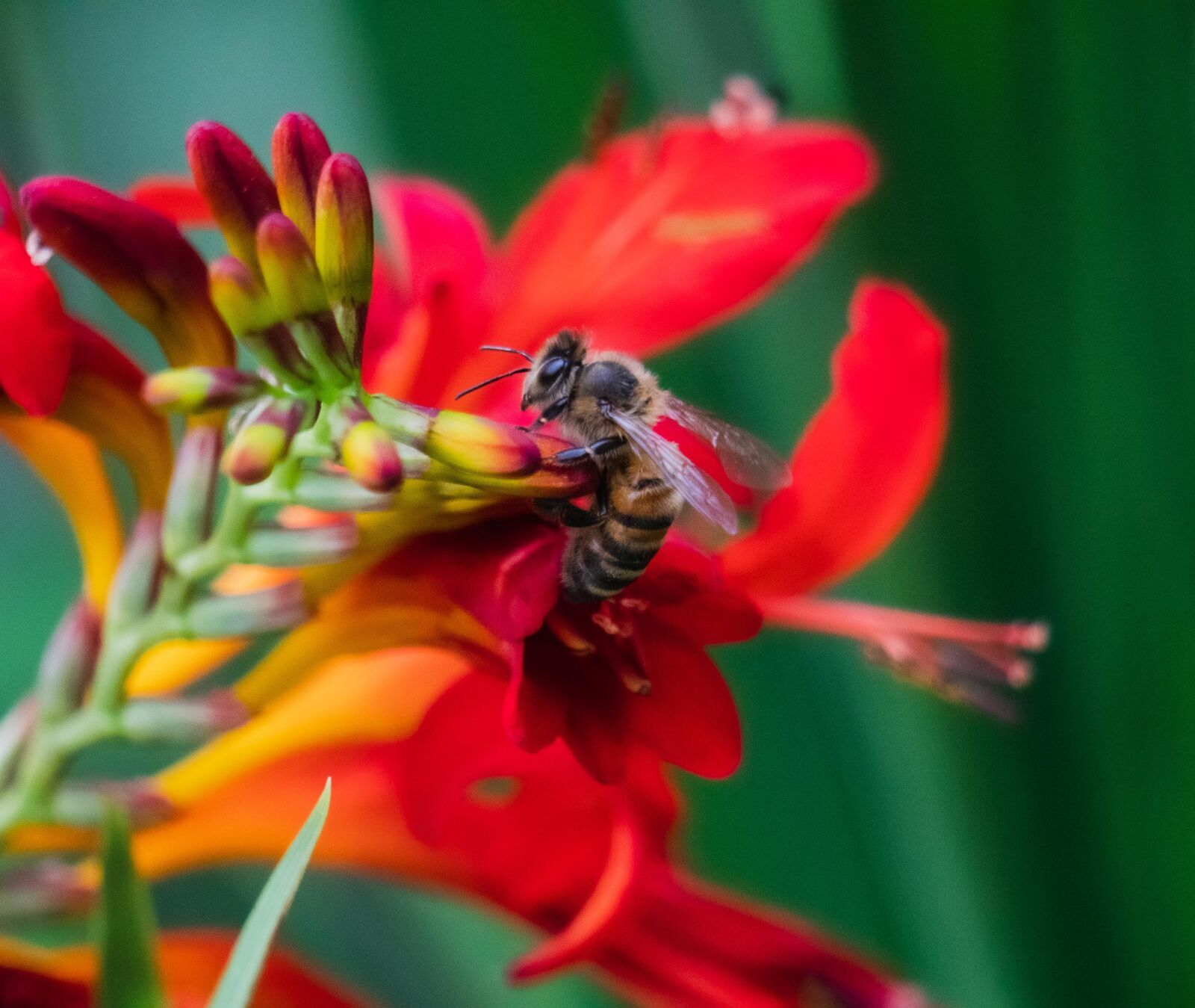 """Sony a6300 sample photo. """"Bee, insect, wings"""" photography"""