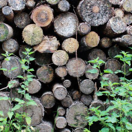 forest, grass, logs, Canon EOS 1100D
