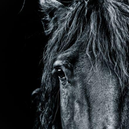 horse, portrait, pony, Canon EOS 5D MARK III