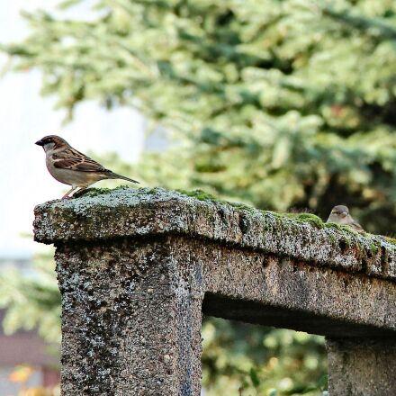 birds, sparrows, archway, Canon EOS 1100D