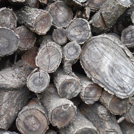 tree, logs, texture, Nikon COOLPIX S3600