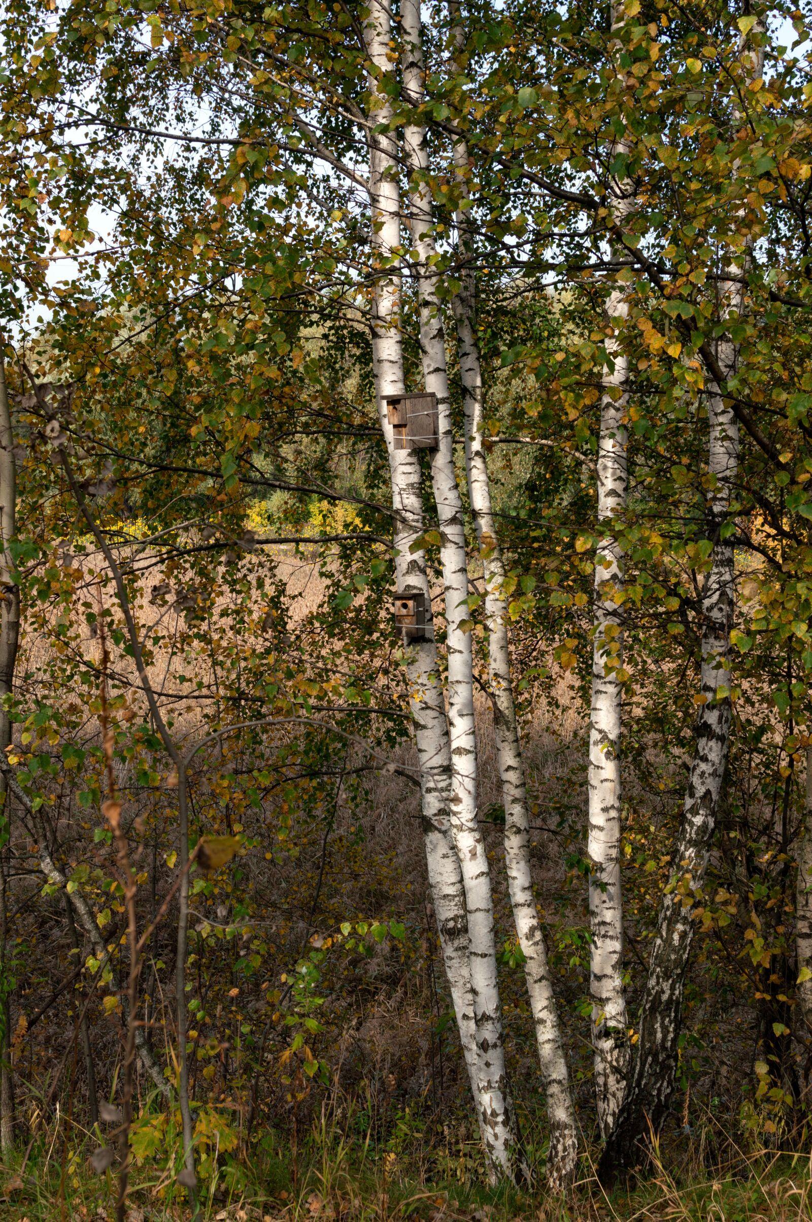 "Nikon D3200 sample photo. ""Birch, birdhouse, autumn"" photography"