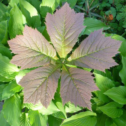 five, leaves, natural pattern, Panasonic DMC-TZ30