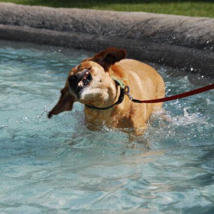 animal, bathing, dog, fountain, Nikon D40X