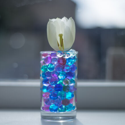 colors, flower, flowers, fun, Nikon D600