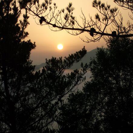 tree, nature, silhouette, Fujifilm FinePix JV200
