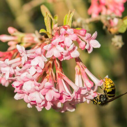 wasp, flower, garden, Canon EOS 1300D