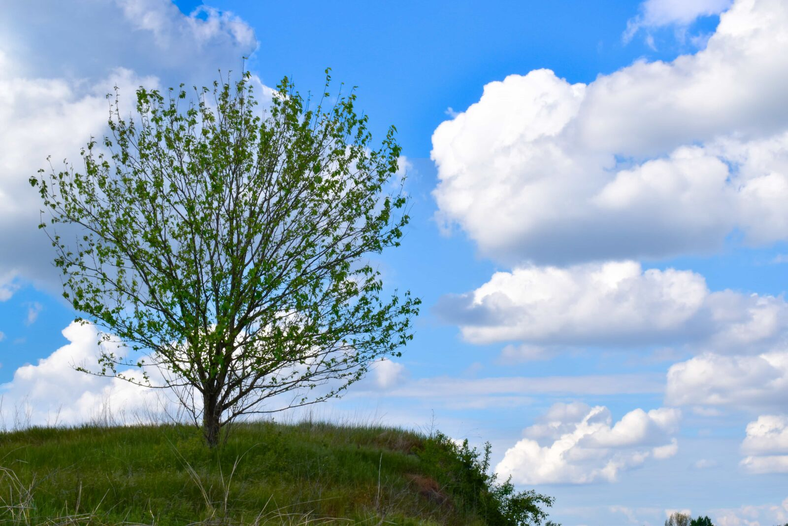 alone, hillside, hilltop, lonely photography