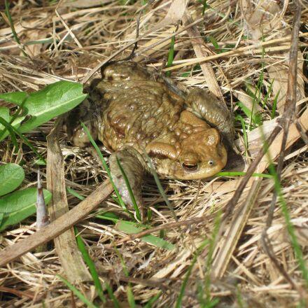 frog, green, grass, Canon DIGITAL IXUS 85 IS
