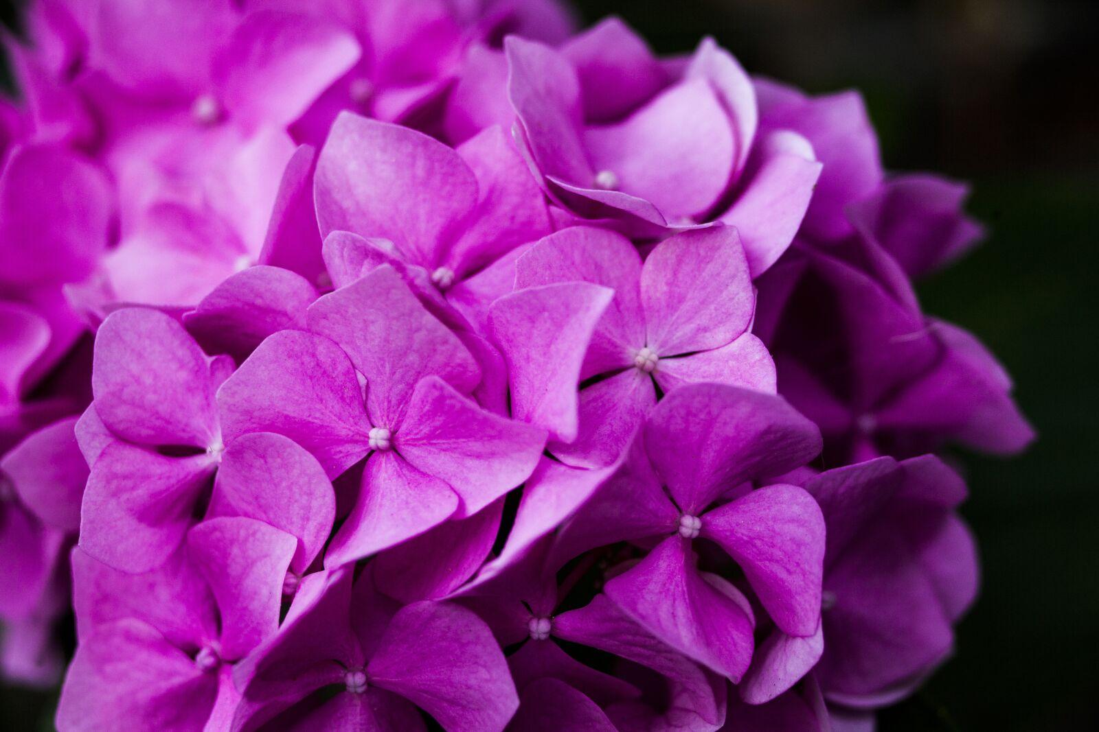 azalea, flower, nature