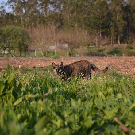 animal, photography, Nikon D5100