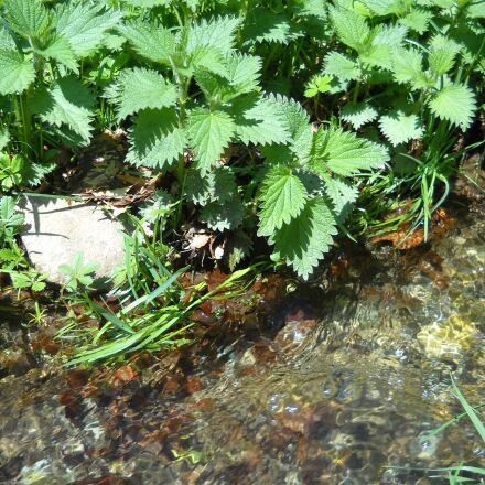 nettle, vegetation, river, Nikon COOLPIX L19