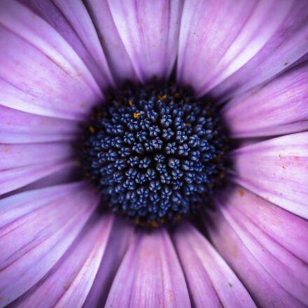 flowers, spring flowers, plants, Sony NEX-5N