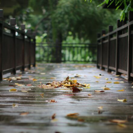 rain, wood, outdoor, Canon EOS 70D