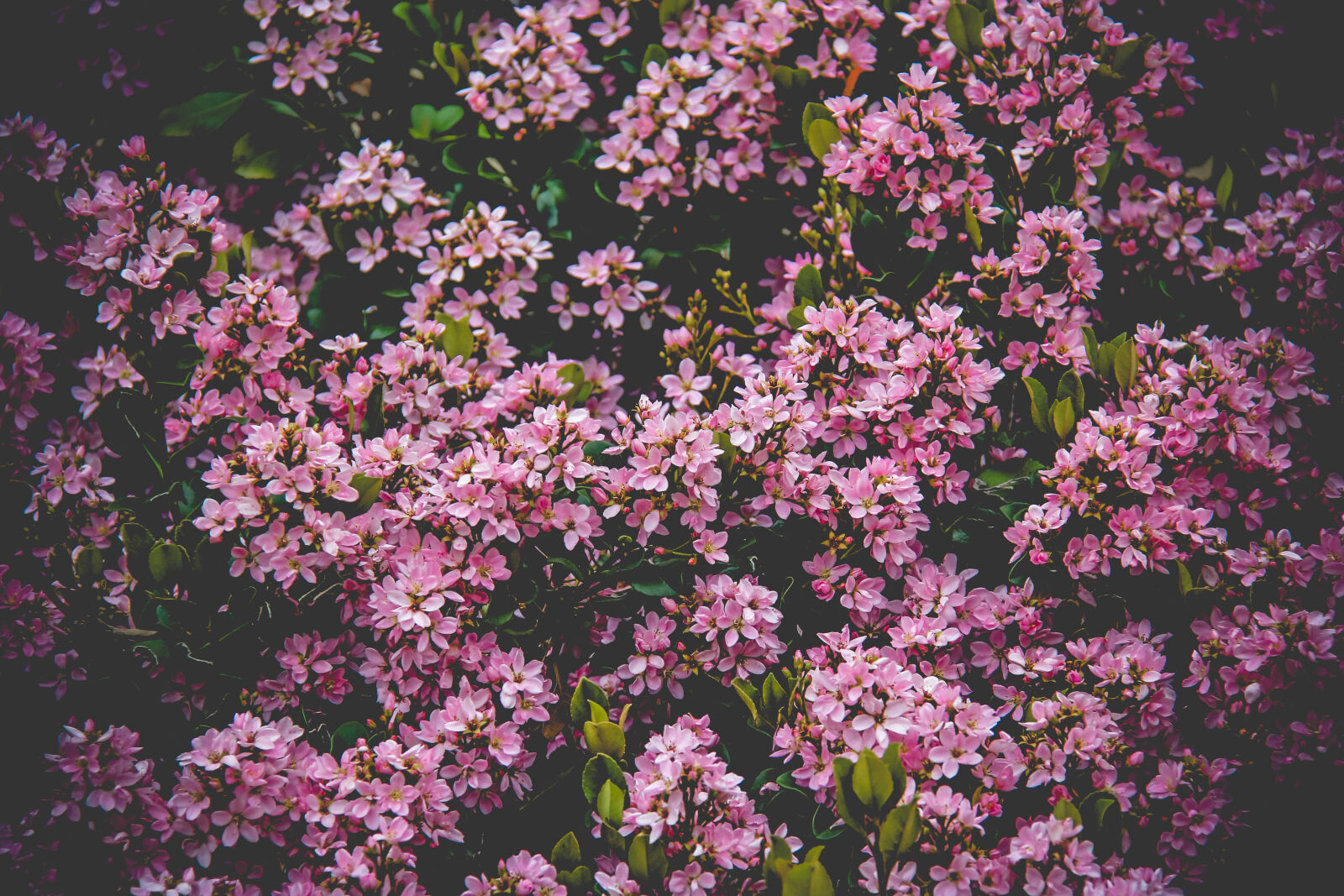 """Canon EOS 60D sample photo. """"Pink, flower, field"""" photography"""