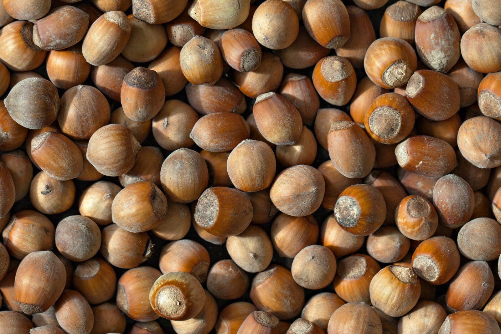 "Canon EOS 5D Mark II sample photo. ""Hazelnut, autumn, harvest"" photography"