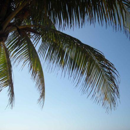 island, palm tree, jamaica, Nikon COOLPIX L18