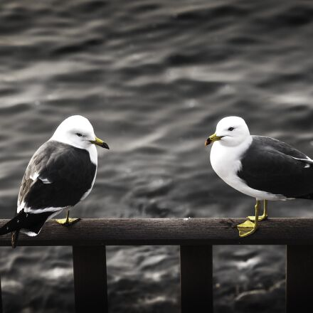 seagull, cucumber also, new, Canon EOS 5D MARK II