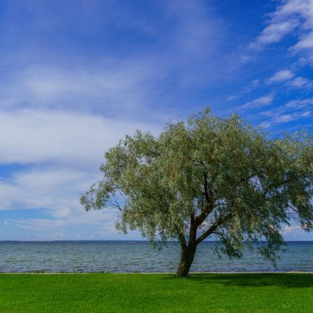 sea, tree, sky, Sony ILCE-6000