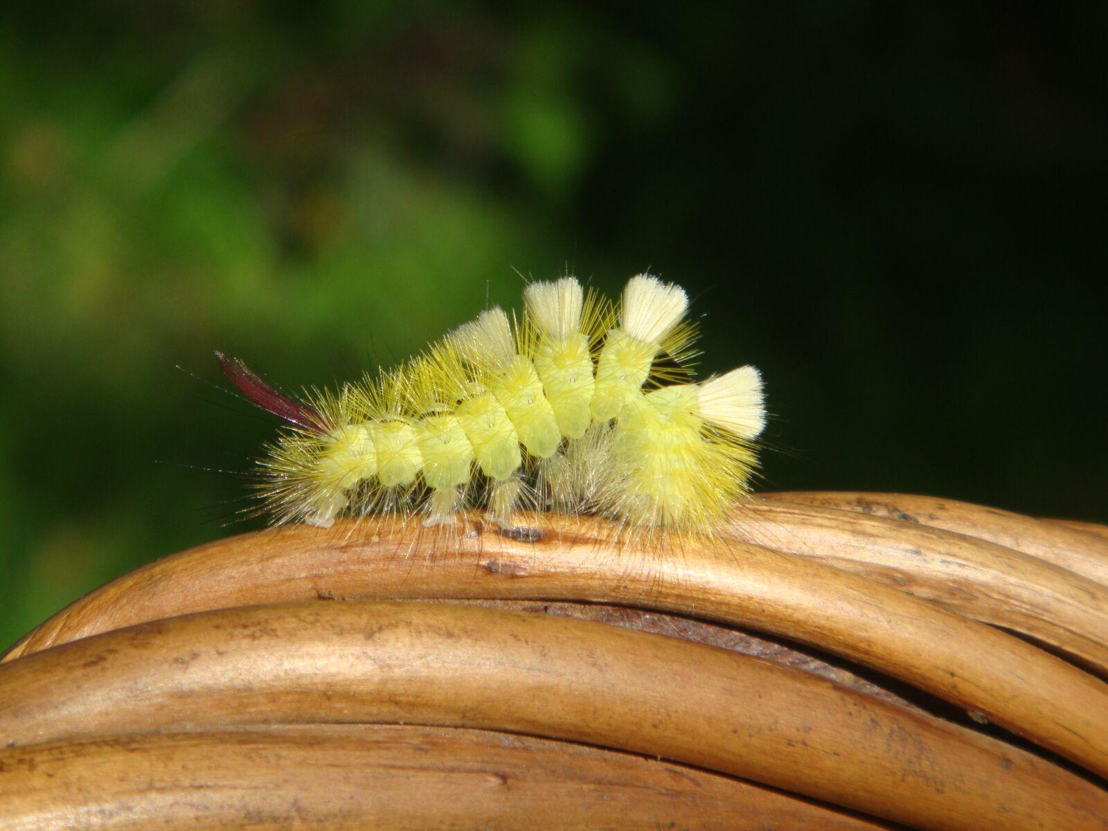 caterpillar, nature, summer