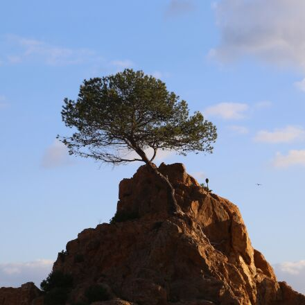 tree, loneliness, force, Canon EOS 6D
