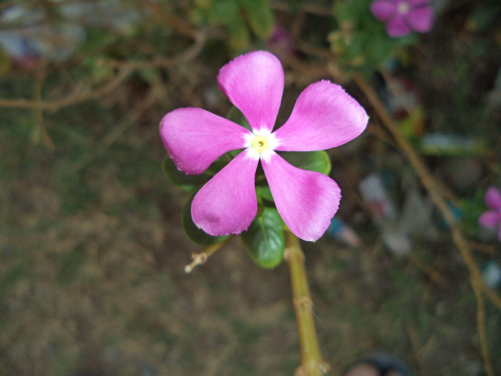 nature, plant, petals