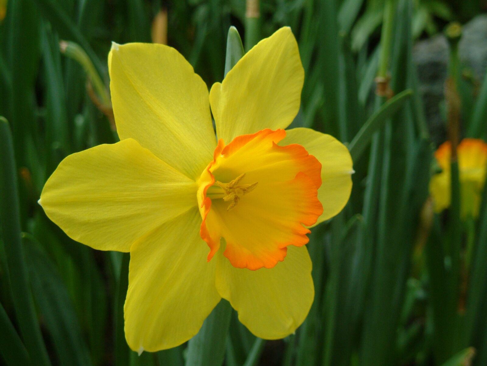 plant, yellow flower, western