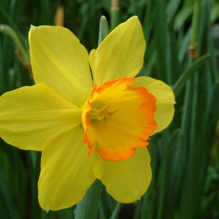 plant, yellow flower, western, Fujifilm FinePix M603