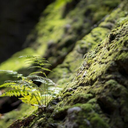 fern, moss, forest, Sony NEX-5N