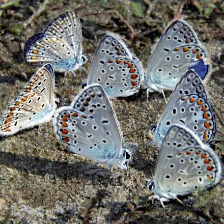 butterflies, blue, rest, Fujifilm FinePix S4500