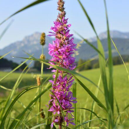 flower, meadow, flowers, Nikon 1 AW1