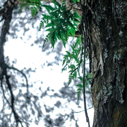 bark, branches, close, up, Samsung NX1