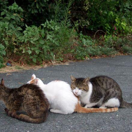 three cats, felines, looking, Fujifilm FinePix F30
