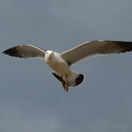 animal, sky, sea, Nikon COOLPIX A900
