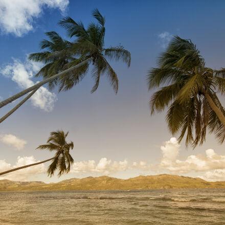 mountains, beach, coconuts, beach, Canon EOS REBEL T2I