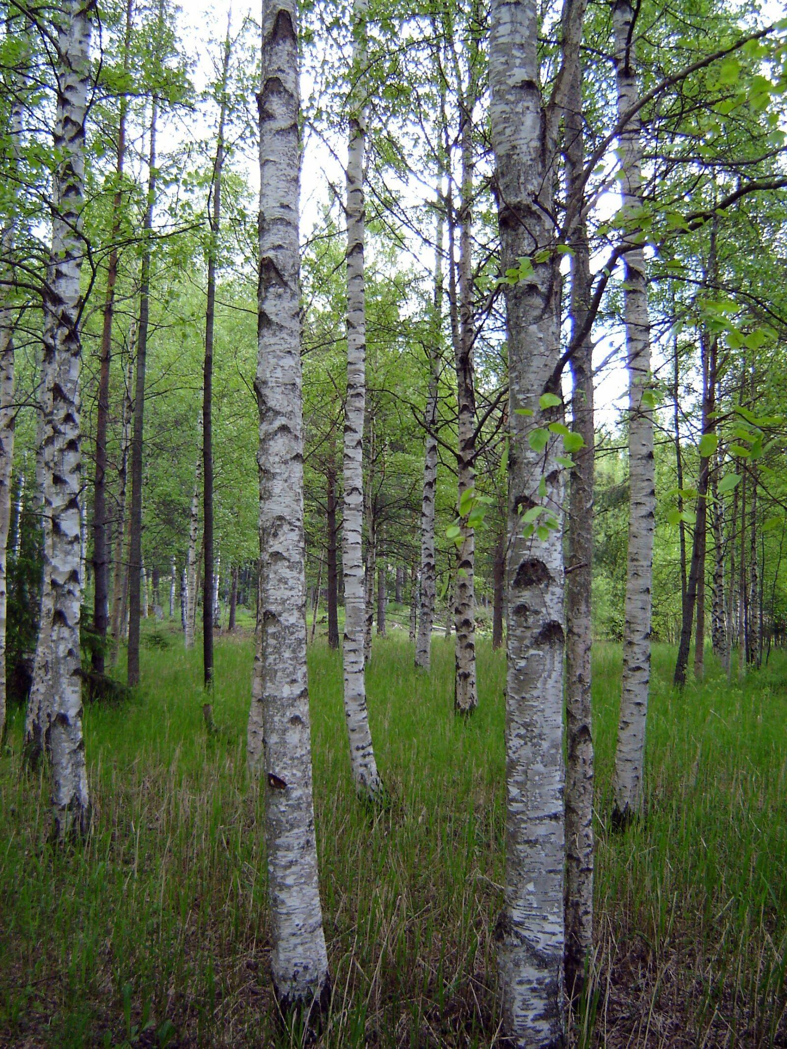 wood, nature, landscape