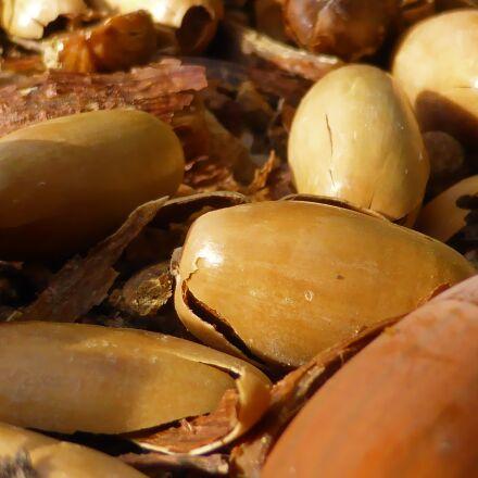 nature, picture, acorn, Panasonic DMC-TZ40