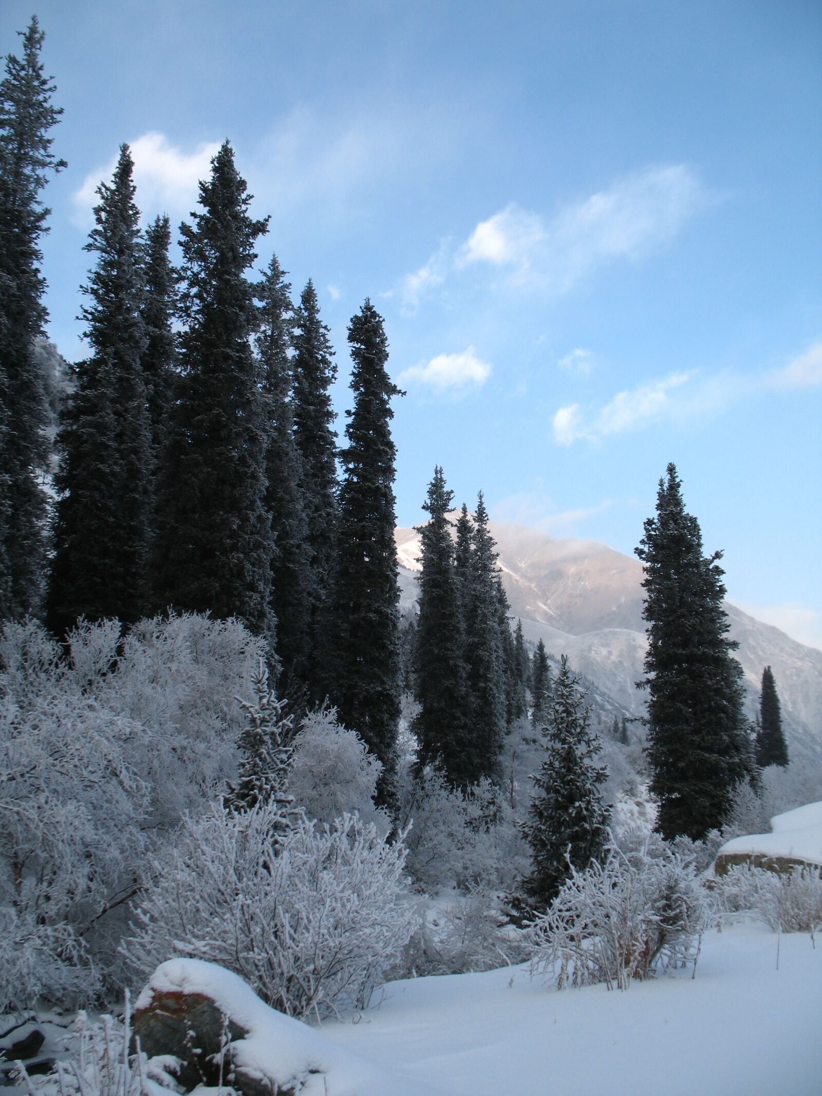 """Canon POWERSHOT A620 sample photo. """"Mountain forests, winter, tien-shan"""" photography"""
