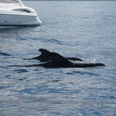 boat, whale, sea, Canon DIGITAL IXUS 990 IS
