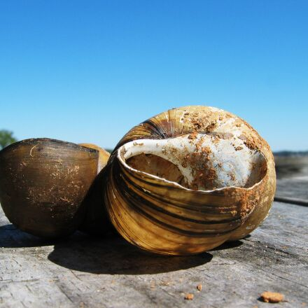 shell, sky, beach, Canon POWERSHOT S45