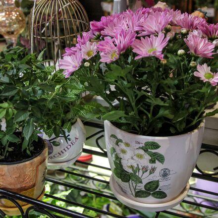 flowers, pots, plants, Canon EOS 550D