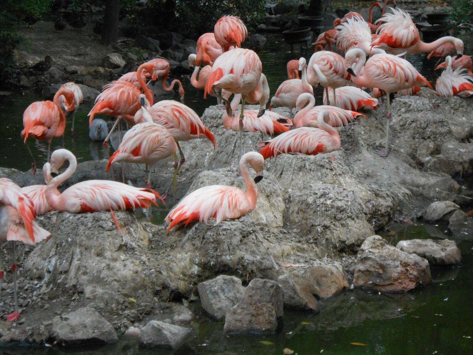 "Nikon Coolpix S4300 sample photo. ""Flamingo, bird, zoo"" photography"