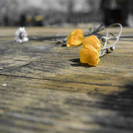 flower, yellow, nature, Nikon 1 S1