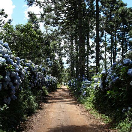 trees, way, path, Canon EOS 6D