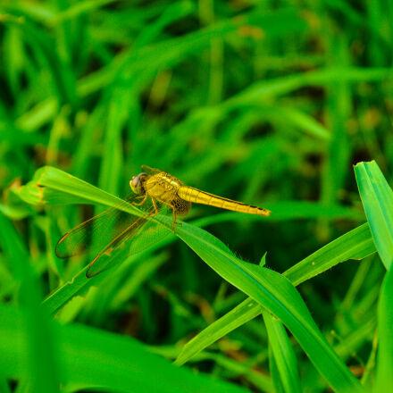green, nature, photography, wild, Nikon D3200