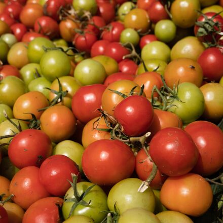 tomatoes, tomato, harvest, Canon EOS 6D MARK II